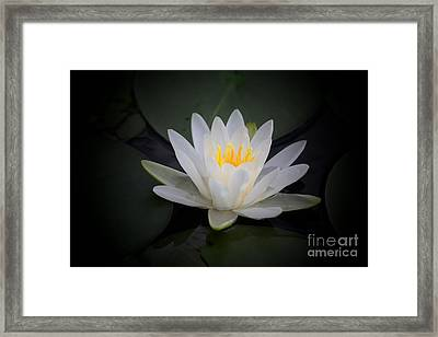Water Lily Framed Print by Marjorie Imbeau