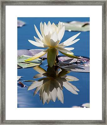 Framed Print featuring the photograph Water Lily by Mary Hone