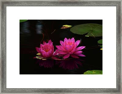 Water Lily Framed Print by Nancy Landry