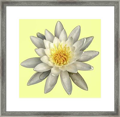 Water Lily On Yellow Framed Print