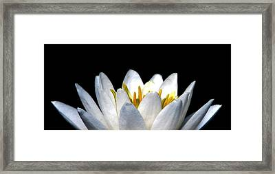 Water Lily Petals Framed Print by Angela Davies