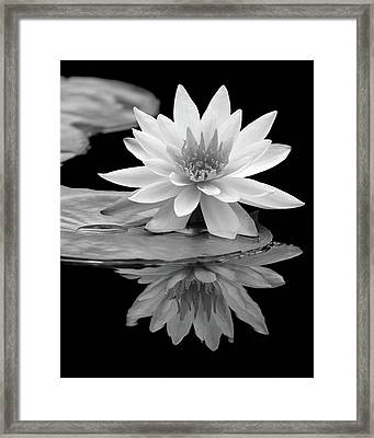 Water Lily Reflections I Framed Print