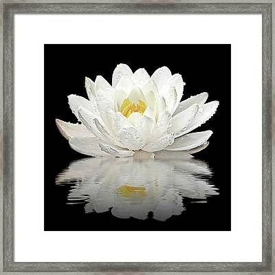 Water Lily Reflections On Black Framed Print by Gill Billington