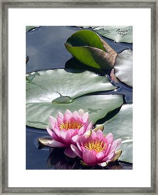 Water Lily Framed Print by Renata Vogl