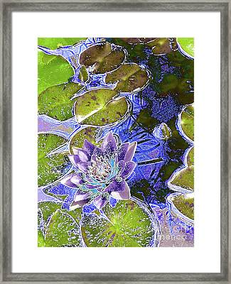 Water Lily Framed Print by Robert Ball