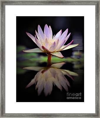 Framed Print featuring the photograph Water Lily by Savannah Gibbs