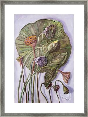 Water Lily Seed Pods Framed By A Leaf Framed Print