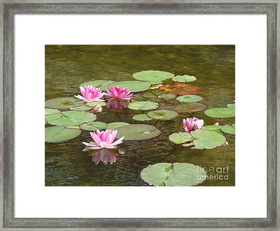 Water Lily Framed Print by Tierong Fu