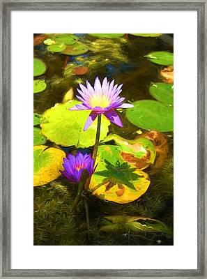 Water Lily Van Goh Framed Print