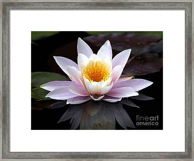 Water Lily With Reflection  Framed Print by Neil Doren