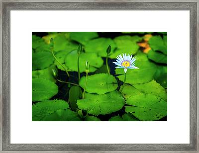 Framed Print featuring the photograph Water Logged by Ryan Manuel