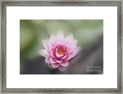 Water Lotus Flower Framed Print