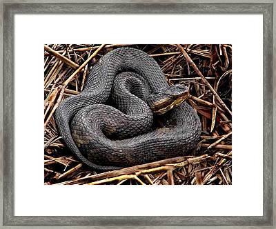 Water Moccasin Framed Print by Bruce W Krucke