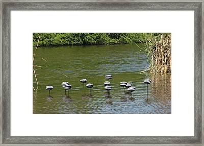 Water Mushrooms Framed Print by Dawn Whitehand