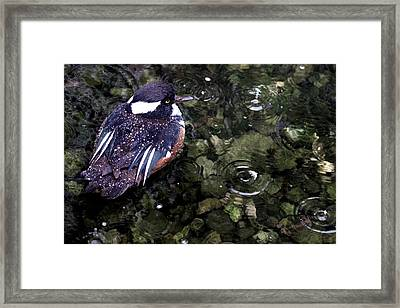 Water Off A Duck's Back Framed Print