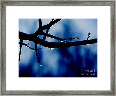 Water On Branch Framed Print