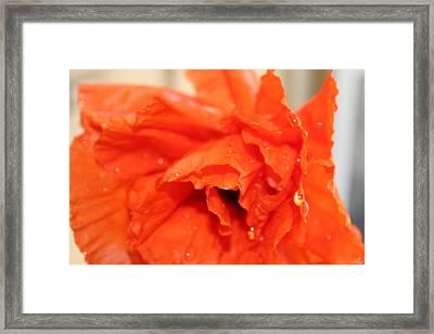 Water On Orange Framed Print by Christin Brodie