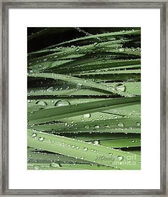 Water On Siberian Iris Framed Print