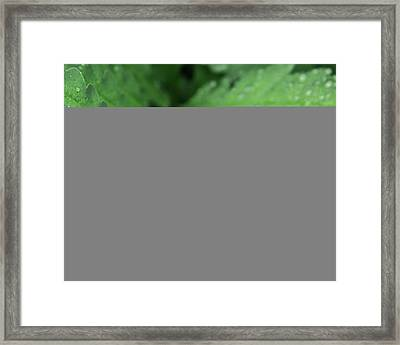 Water On The Fronds Framed Print
