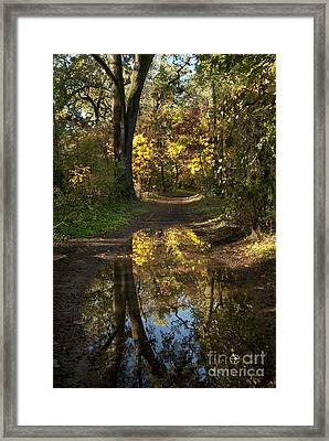 Water On The Trail Framed Print