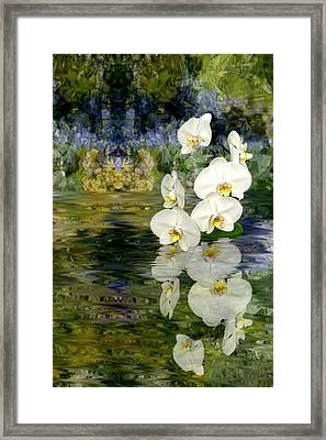 Framed Print featuring the photograph Water Orchid by Tom Romeo