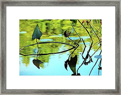 Water Plants Framed Print by Debbie Oppermann