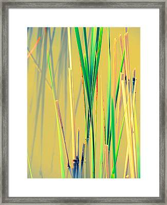 Water Reeds Soft Framed Print by Beth Akerman