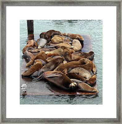 Water Setters Framed Print by Ty Helbach