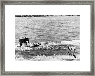 Water Skiing Elephant Framed Print