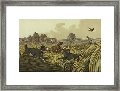 Water Spaniels Framed Print by Henry Thomas Alken