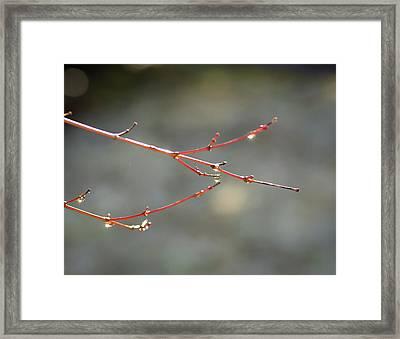 Water Sparkle Framed Print