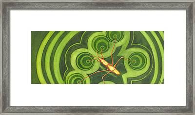 Water Strider Framed Print by Catherine G McElroy