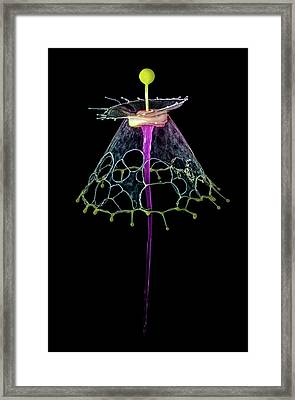 Water Umbrella Framed Print