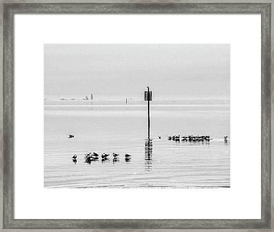 Water Walking Birds Framed Print