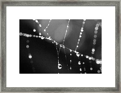 Framed Print featuring the photograph Water Web by Darcy Michaelchuk