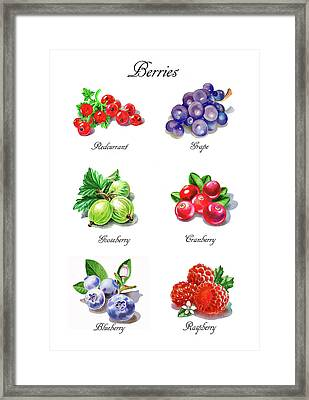 Watercolor Berries Illustration Collection I Framed Print