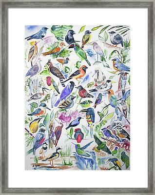Watercolor - Birds Of Ecuador Framed Print by Cascade Colors