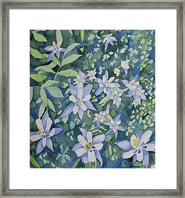 Framed Print featuring the painting Watercolor - Blue Columbine Wildflowers by Cascade Colors