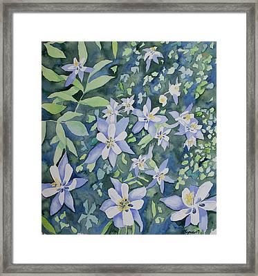 Watercolor - Blue Columbine Wildflowers Framed Print