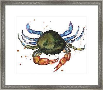 Watercolor Crab Painting Framed Print by Alison Fennell