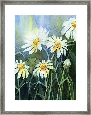 Daisies Flowers  Framed Print