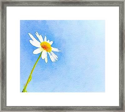 Watercolor Daisy Framed Print by Marianna Mills