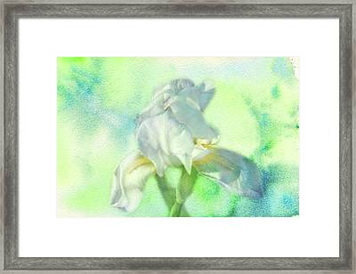 Watercolor Iris Framed Print by Joan Bertucci