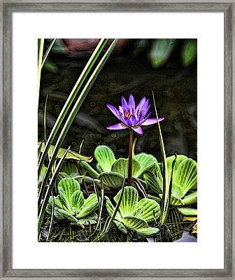 Watercolor Lily Framed Print