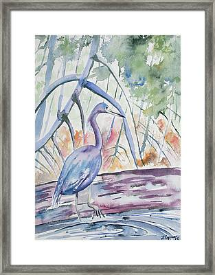 Watercolor - Little Blue Heron In Mangrove Forest Framed Print