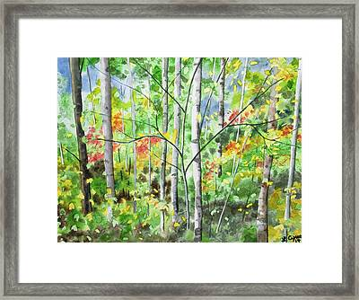 Framed Print featuring the painting Watercolor - Northern Forest by Cascade Colors