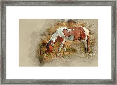 Watercolor Painting Of Close Up Of Brown And White New Forest Po Framed Print by Matthew Gibson