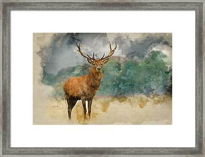 Watercolor Painting Of Portrait Of Majestic Red Deer Stag In Aut Framed Print by Matthew Gibson
