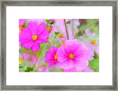 Framed Print featuring the painting Watercolor Pink Cosmos by Bonnie Bruno