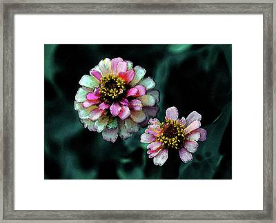 Watercolor Pink Zinnias And Smoke 2227 W_2 Framed Print